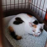 保護猫広場ラブとハッピーのブログはお引越ししました!新しいブログはこちらです。新しい保護猫さんと最新の様子が見れます!!保護猫広場ラブとハッピー