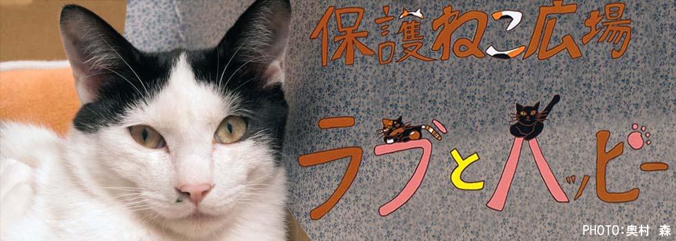 保護猫広場 ラブとハッピー